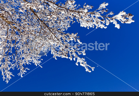 winter branch stock photo, Winter branch covered with snow by serkucher
