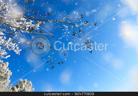 Winter background stock photo, Winter background by serkucher