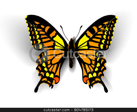 Realistic butterfly on white stock photo, Realistic butterfly. Vector illustration of a top view by sermax55