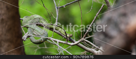 Poisonous Green snake sitting on a branch stock photo, Poisonous Green snake sitting on a branch of a tree in Asia by attiarndt