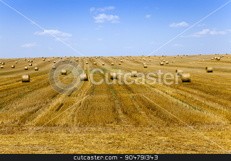 stack of straw in the field   stock photo, haystacks straw lying in the agricultural field after harvest. summer by ihar leichonak
