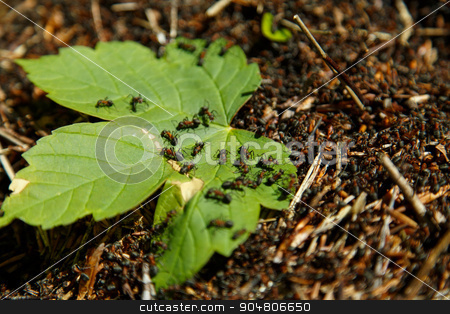 Leaf in an anthill stock photo, Near Basel, Switzerland - May 4, 2014: Photograph of a green leaf in an anthill. by Oliver Foerstner