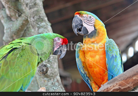 Parrots stock photo, 2 parrots, macaws, perched on a tree by Lucy Clark