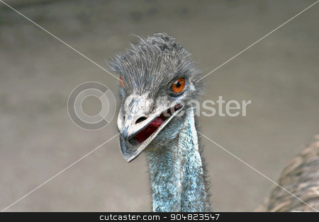 An Emu stock photo, The head and neck of an emu by Lucy Clark