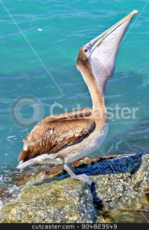 Pelican stock photo, A pelican standing on a rock eating a fish by Lucy Clark