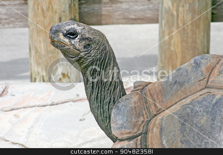 Tortoise stock photo, The head and shell of a tortoise by Lucy Clark