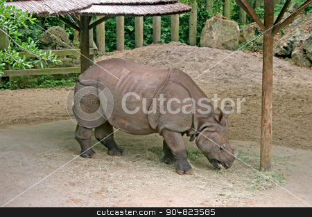 Rhino stock photo, A rhino standing in the dirt and eating by Lucy Clark
