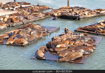 Sealions stock photo, A group of sealions sitting on pontoons by Lucy Clark