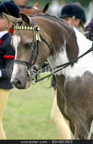 Horse stock photo, The front and head of a dressage horse by Lucy Clark