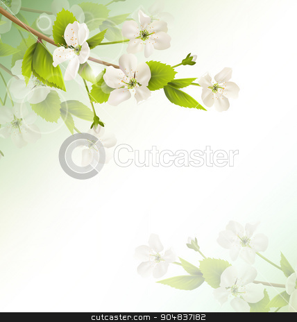 Cherry branch with white flowers on green stock photo, Cherry branch with white flowers on green background by Makkuro_GL