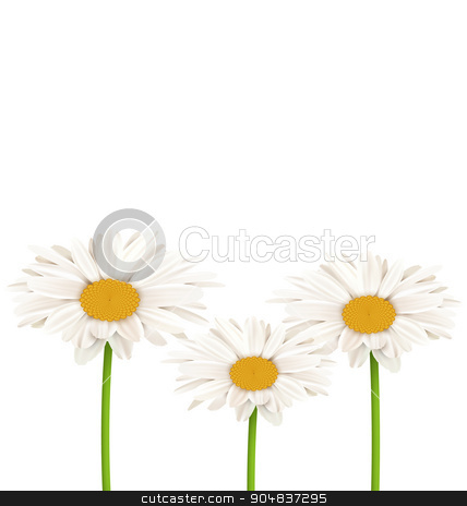 Three chamomiles isolated on white. Floral nature background stock photo, Three chamomiles isolated on white. Floral nature flower background by Makkuro_GL