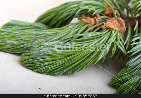 Fir-needle tree branches composition as a background texture stock photo, Fir-needle tree branches composition as a background texture by Sergey Lysenkov
