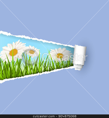 Green grass lawn with white chamomiles and ripped paper sheet is stock vector clipart, Green grass lawn with white chamomiles and ripped paper sheet isolated on green. Floral nature flower background by Makkuro_GL
