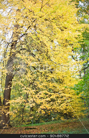 autumn forest landscape stock photo, season, nature and environment concept - autumn forest landscape by Syda Productions