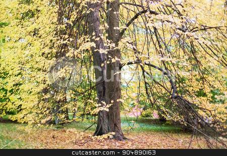 autumn forest landscape stock photo, season, nature and environment concept - autumn forest landscape by Syda Productions