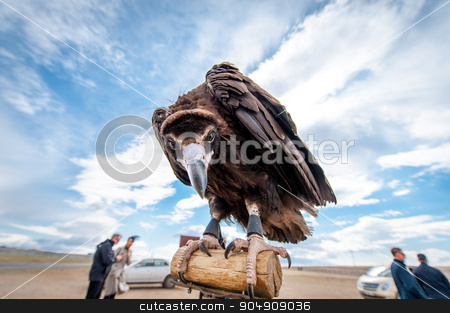 MONGOLIA - May 17, 2015: Specially trained eagle for hunting in mongolian desert near Ulaan-Baator. stock photo, MONGOLIA - May 17, 2015: Specially trained eagle for hunting in mongolian desert near Ulan-Bator. by agnormark