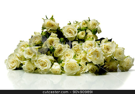 roses on a white background stock photo, The photo shows roses on a white background by AlexBush