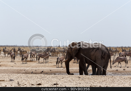 crowded waterhole with Elephants stock photo, Crowded waterhole with Elephants, zebras, springbok and orix. Etosha national Park, Ombika, Kunene, Namibia. True wildlife photography by Artush