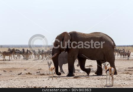 crowded waterhole with Elephants stock photo, Crowded waterhole with Elephants, zebras, springbok and orix. Etosha national Park, Ombika, Kunene, Namibia. True wildlife photography by Artush