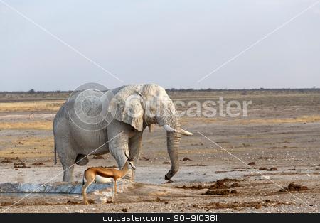 White african elephants in Etosha stock photo, White african elephants from mud on waterhole, Etosha national Park, Ombika, Kunene, Namibia. True wildlife photography by Artush