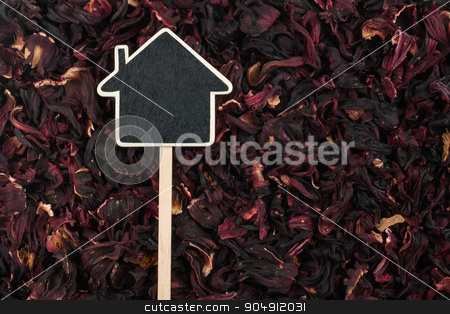 House pointer, the price tag lies on   hibiscus stock photo, House pointer, the price tag lies on  hibiscus,  with space for your text by alekleks