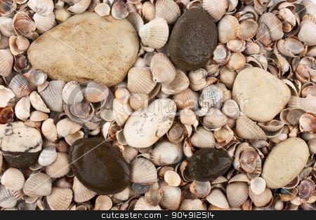 Shells, stones, background stock photo, Wet stones lying on the shells, the background by alekleks