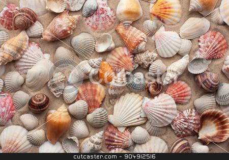 Sea shells on sand  stock photo, Sea shells on sand as background  by alekleks