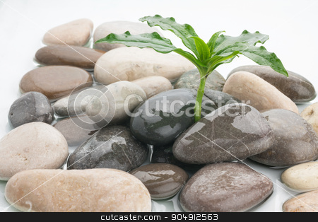 zen stones and leaves with water drops  stock photo, zen stones and leaves with water drops can be used as background by alekleks