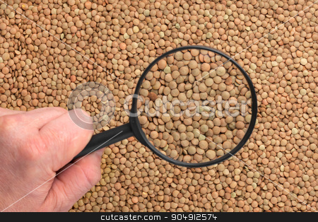 Human hand holding a magnifying glass over the lentils  stock photo,    Human hand holding a magnifying glass over the lentils can be used as background by alekleks