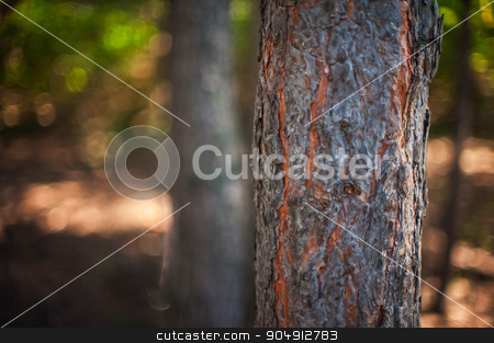 Closeup tree in the forest stock photo, Closeup tree in the forest with sun rays by olinchuk