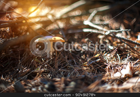 Forest mushroom with shallow dof stock photo, Forest mushroom. Art photo with shallow depth of field and bokeh by olinchuk