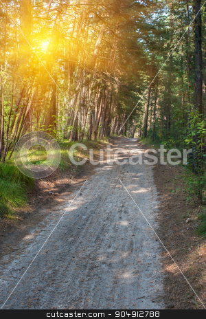 Forest summer road stock photo, Beautiful scene in the forest with sun rays and shadows by olinchuk