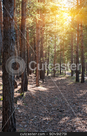 Forest summer scene stock photo, Beautiful scene in the forest with sun rays and shadows by olinchuk