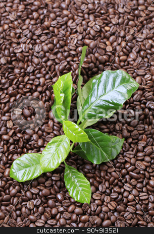 Roasted coffee beans stock photo, Roasted coffee beans and fresh coffee leaves by Digifoodstock