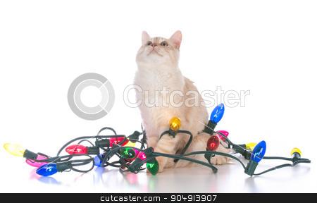 christmas kitten stock photo, christmas kitten tangled in lights on white background by John McAllister