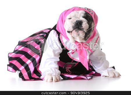 pirate puppy stock photo, dog dressed up like a pirate on white background - bulldog female by John McAllister