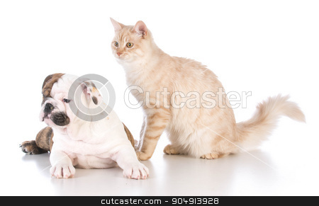 dog and cat stock photo, dog and cat isolated on white background by John McAllister