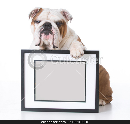 dog holding picture stock photo, bulldog holding picture frame with room for copyspace on white background by John McAllister