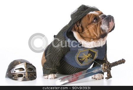 guard dog stock photo, bulldog dressed up like a knight on white background by John McAllister