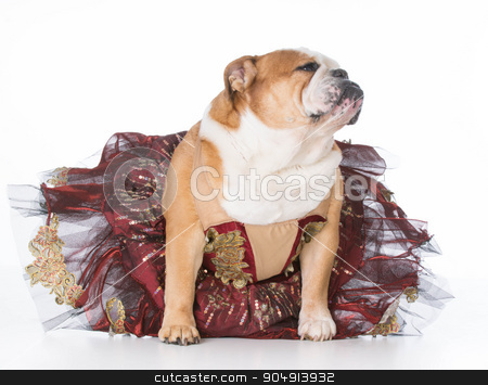 dancing dog stock photo, bulldog wearing ballerina costume sitting on white background by John McAllister