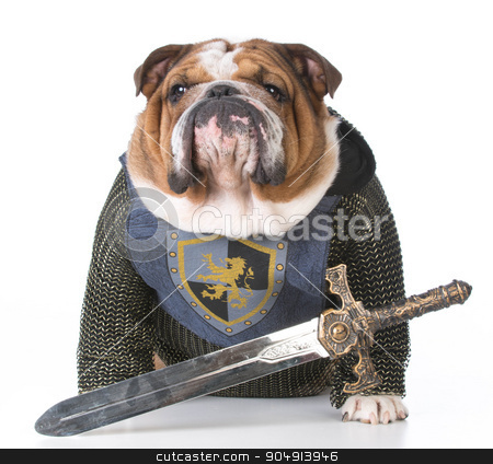 guard dog stock photo, bulldog dressed up like a knight on white background by John McAllister