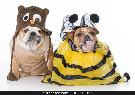 birds and the bees stock photo, two bulldogs wearing birds and bees costume by John McAllister