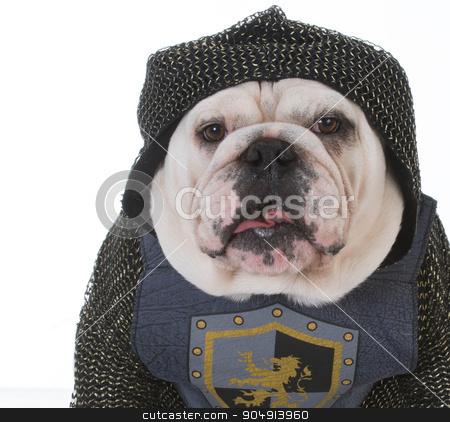 knight stock photo, bulldog dressed up like a knight on white background by John McAllister