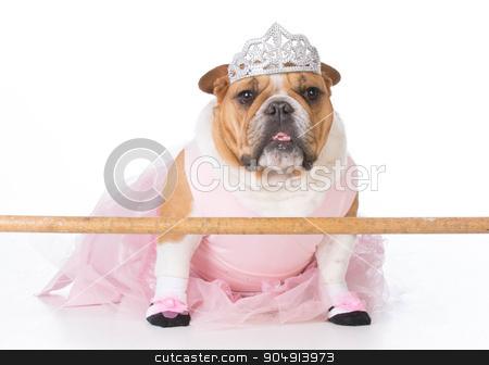 dancing dog stock photo, bulldog wearing ballerina costume sitting on white background by John McAllister