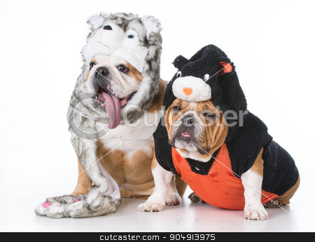 dog and cat stock photo, two bulldogs wearing dog and cat costumes on white background by John McAllister