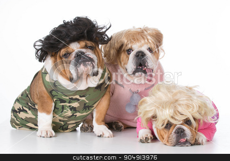 three bulldogs stock photo, three bulldogs wearing wigs and clothing on white background by John McAllister