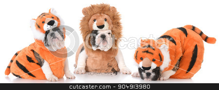 cute puppies stock photo, litter of bulldog puppies dressed up like lions and tigers by John McAllister