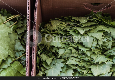 Group of Fresh Grape Leaves in Marketplace stock photo, Group of fresh grape leaves on a counter in an open marketplace by OZMedia