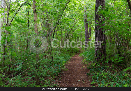 summer forest and path stock photo, nature, season and environment concept - summer forest and path by Syda Productions