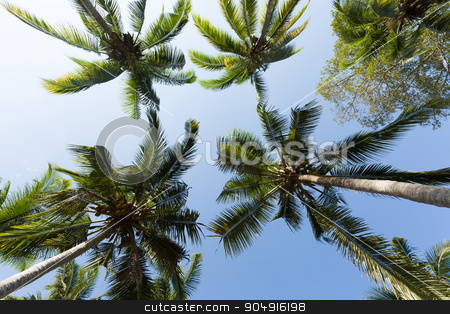 coco-palm tree against blue sky stock photo, coco-palm tree against blue sky, Indonesia Bali, with blue sky by Artush